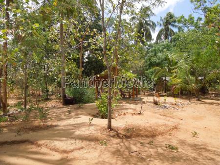 backyard in sri lanka