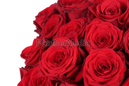 strauss rote rosen zum valentinstag oder