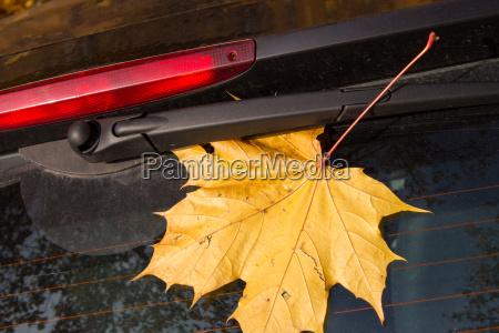 autumn leaf on a car window