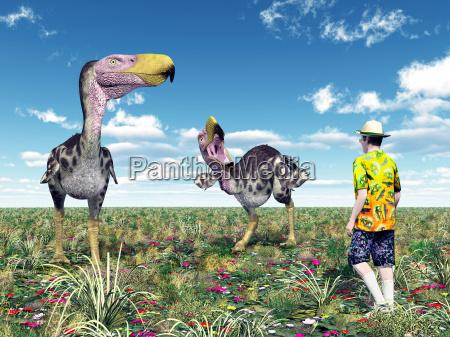 terrorvogel kelenken und tourist