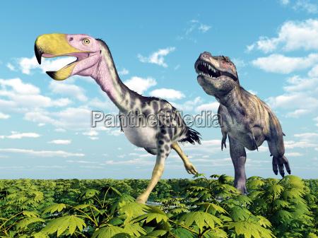 tyrannosaurus rex attackiert den terrorvogel kelenken