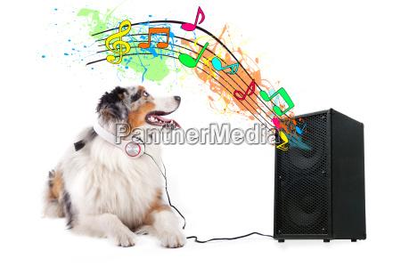 hund hoert lied aus box