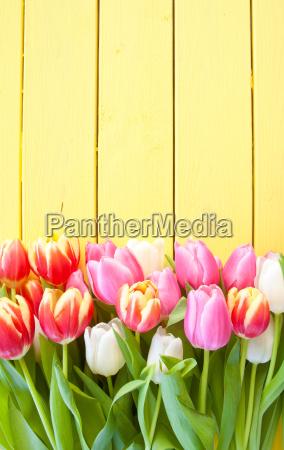 bunte tulpen auf gelbem hintergrund