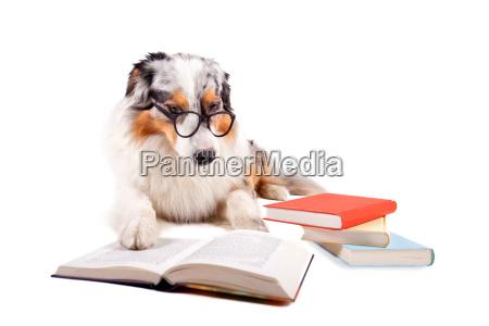 lesender hund