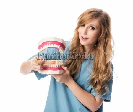 frau mit zahnmodell und zahnbuerste