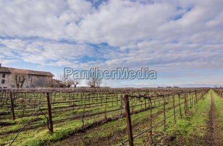 agricultural landscape with vineyard