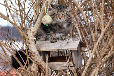 eine katze auf dem vogelhaus
