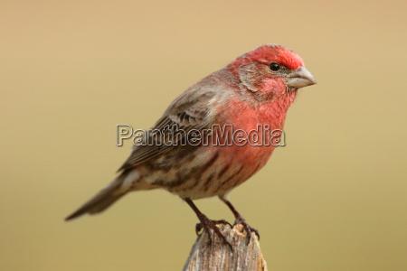 vogel wild wildlife fink natur