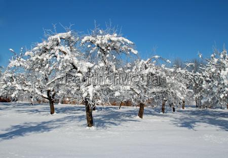 blue tree winter ice frost winter