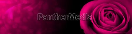 rose pink banner