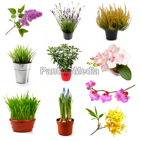collection with different flowers and plants