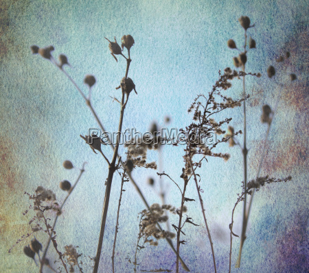 grasses silhouettes watercolor