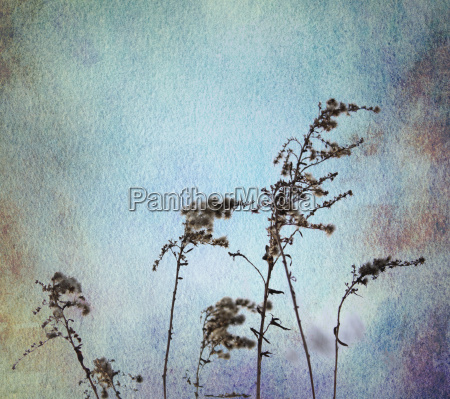 graeser aquarell blau ocker sepia