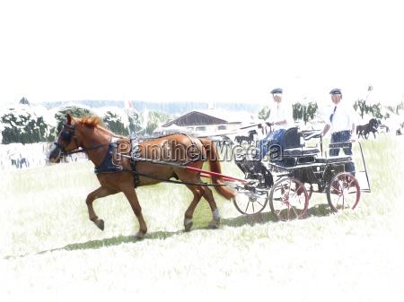 pferdegespannfahren kunstfoto