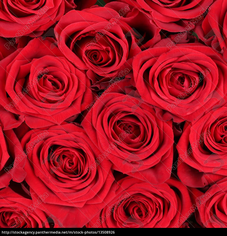 Hintergrund Rosen Zum Valentinstag Geburtstag Oder Stock Photo