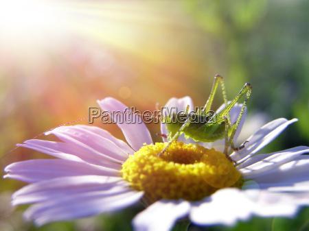 blume pflanze gewaechs sonnenlicht fruehjahr sonnenstrahl