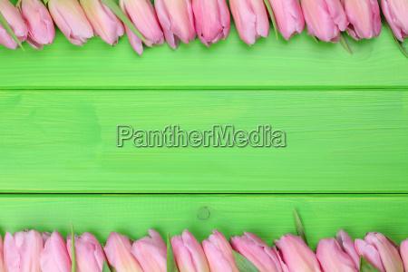 rahmen aus tulpen blumen zum fruehling