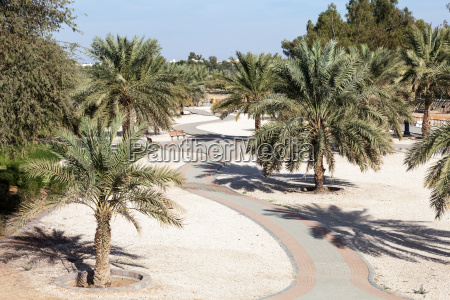 palm trees in a city park