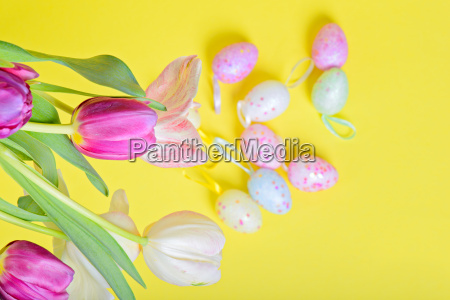 top view to the easter tulips