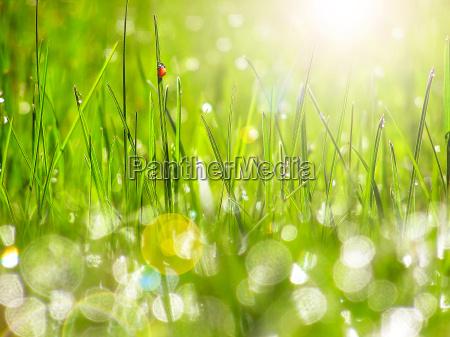 gruenes gras unter der morgensonne