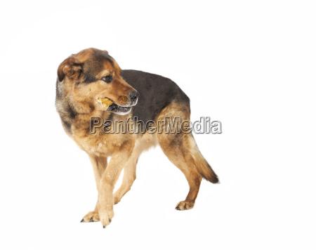 dog looks back