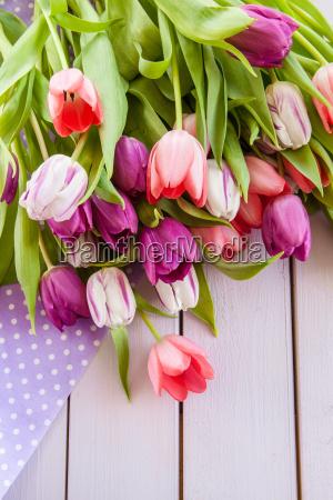 bunte tulpen auf lila