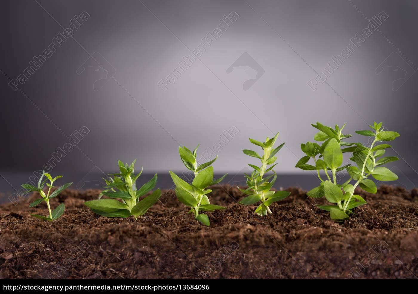 Gewaltig Grüne Pflanzen Galerie Von Lizenzfreies Foto 13684096 - Grüne Wachsen Im