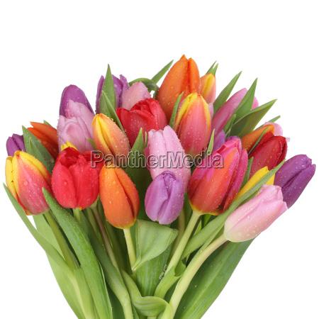 blumenstrauss mit tulpen blumen im fruehling