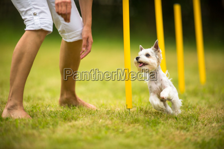 animale cane vivacita formazione training trapanare