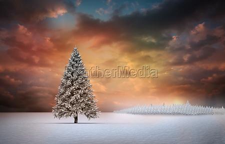 tannenbaum in schneebedeckten landschaft