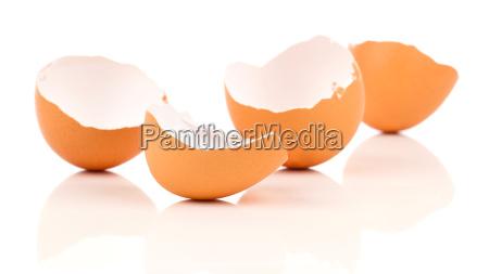 egg shell on white background