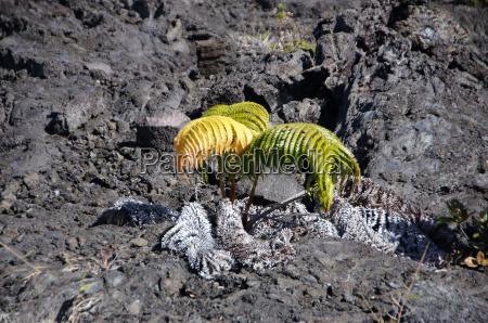 vulkanische aktivitaet hawaii usa