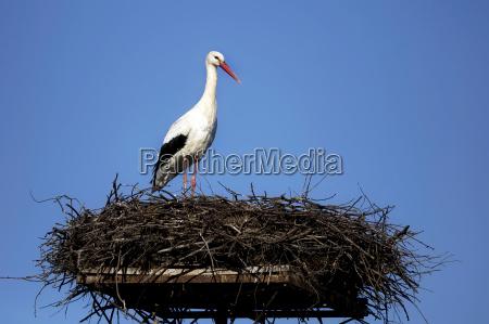blau vogel nisten storch nest bewoelkung