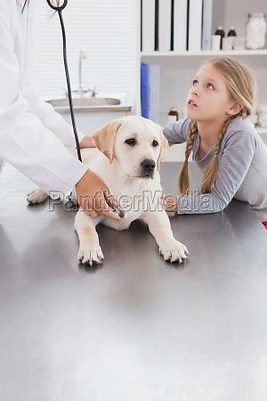 tierarzt der einen hund mit stethoskop