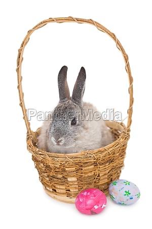 haeschen kaninchen auf dem korb mit