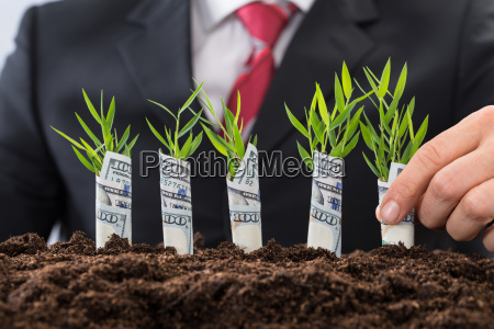 businessman holding saplings covered with american
