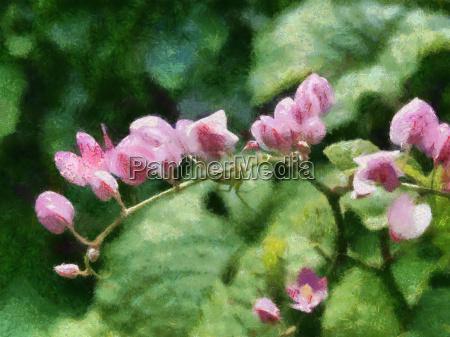 rosa blume im garten