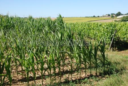 landwirtschaft ackerbau malerisch ackerboden landschaftsbild landschaft