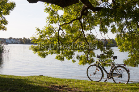 fahrrad unter baum am see