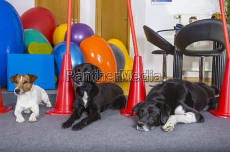hunde patienten