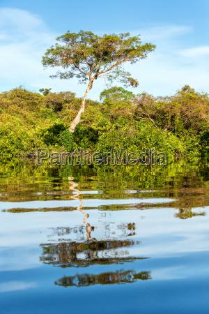 jungle reflection in amazon