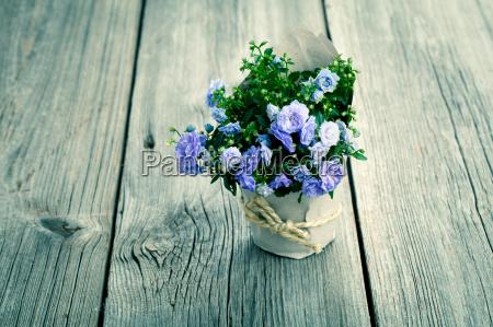 blue campanula flowers in paper packaging