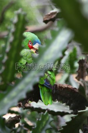 animal bird coloured colourful gorgeous multifarious