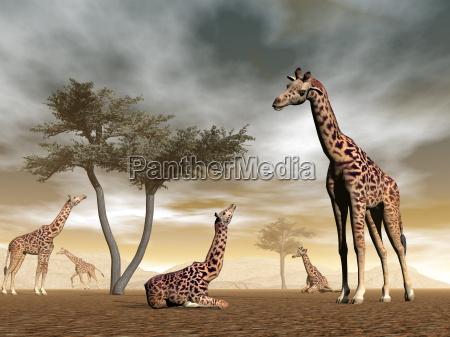 giraffen in der savanne 3d