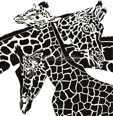 giraffe koepfe