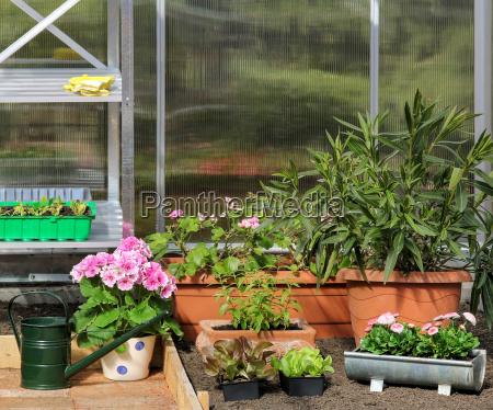 gewaechshaus innen greenhouse