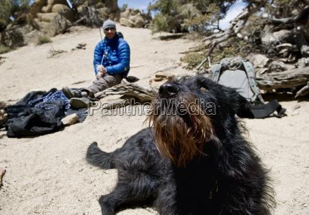 ein schwarzer hund beobachtet seine besitzer