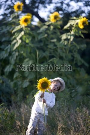 garten blume pflanze gewaechs usa sonnenblume