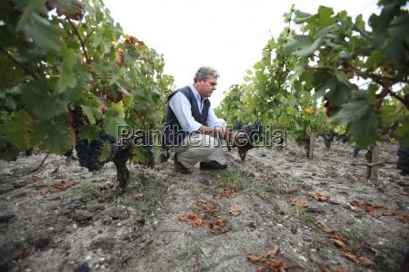 landwirtschaft ackerbau europa horizontal weinberg frankreich