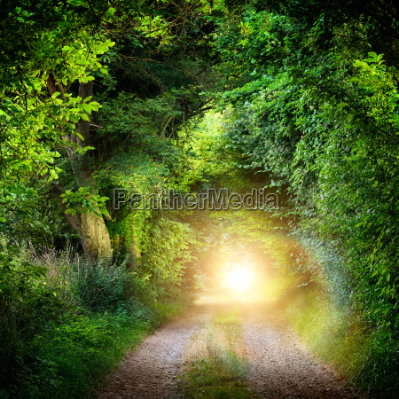 tunnel of trees leading into the